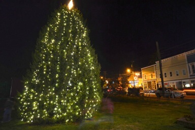 Berryville Christmas Tree, 2012