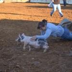 Pig Scramble Clarke County Fair
