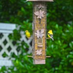 A pair of Goldfinches in the Waypoint House Garden